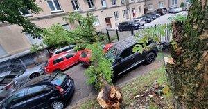 Audra Vilniuje pridarė nuostolių: virtęs medis griuvo tiesiai ant automobilių (nuotr. Broniaus Jablonsko)