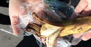 Banane rasta adata: šįkart – netoli Kauno (nuotr. stop kadras)