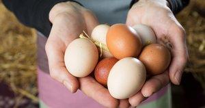 Kiaušiniai (nuotr. Fotolia.com)
