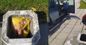 Šokiruojantis radinys Klaipėdos rajone: šiukšlinėje – kiaulių galvos (nuotr. vel.lt)