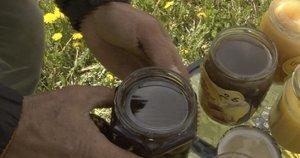 Tokio ankstyvo medaus labai nedaug: išsiskiria savo spalva