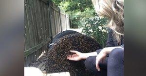 Bitės (nuotr. stop kadras)