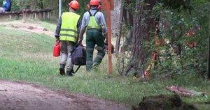 Kuršėniškiai kreipėsi pagalbos: pamatę virstančius medžius gyventojai sunerimo (nuotr. stop kadras)