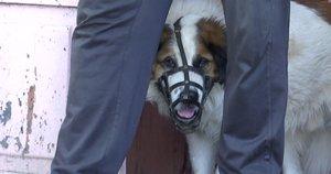 Šuo užpuolė mergaitę (nuotr. stop kadras)