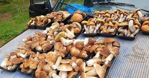 Suvalkijos pakelėse pilna grybų pardavėjų (nuotr. stop kadras)