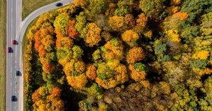 Sukūrė lapų pageltimo žemėlapį: nurodė, kurioje Lietuvos dalyje kraštovaizdis rudeniškiausias