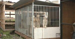 Šunų pragaras Kretingos rajone: nuo vaizdų gyventojai nesulaiko ašarų (nuotr. stop kadras)