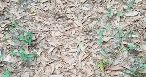 Tarp lapų suraskite gyvatę (nuotr. Twitter)