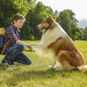 Garsiausias pasaulio šuo: 12 faktų apie Lesę, kurių nežinojote