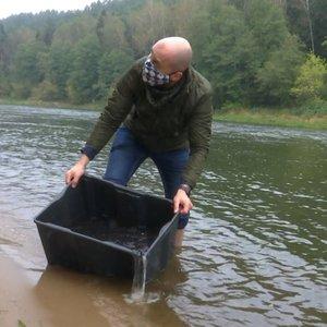 Ruduo – įžuvinimo metas: į Lietuvos ežerus ir upes įleista kone 9 mln. jauniklių