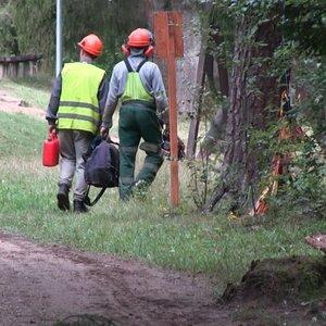 Kuršėniškiai kreipėsi pagalbos: pamatę virstančius medžius gyventojai sunerimo