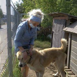 Į Skvernelio pasitarimą dėl gyvūnų prieglaudos vadovai įsiprašyti turėjo patys