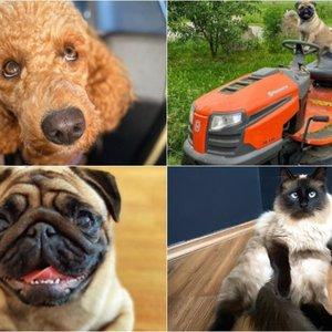 Žiauraus elgesio su gyvūnais akivaizdoje plinta nauja mada: išreiškia meilę augintiniams