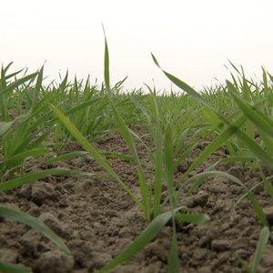 Stebisi keistu augalų elgesiu: specialistai aiškina – tai yra gynyba dėl sausros