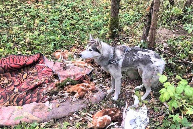 Žiaurus poelgis Ukmergės rajone: šunį pririšo prie medžio ir paliko miške (nuotr. Ukmergės žinios)