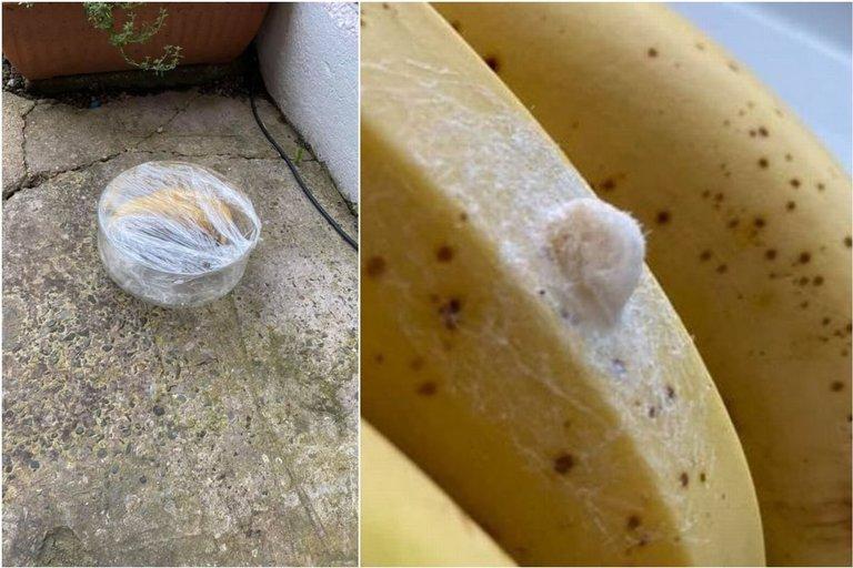 Jemma Davies (34) iš Didžiosios Britanijos ant parduotuvėje pirktų bananų aptiko kiaušinėlių ir nusprendė internete paieškoti informacijos, kas tai. Rezultatai ją pašiurpino.  (nuotr. facebook.com)