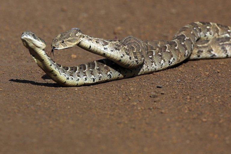 Gyvatės (nuotr. SCANPIX)