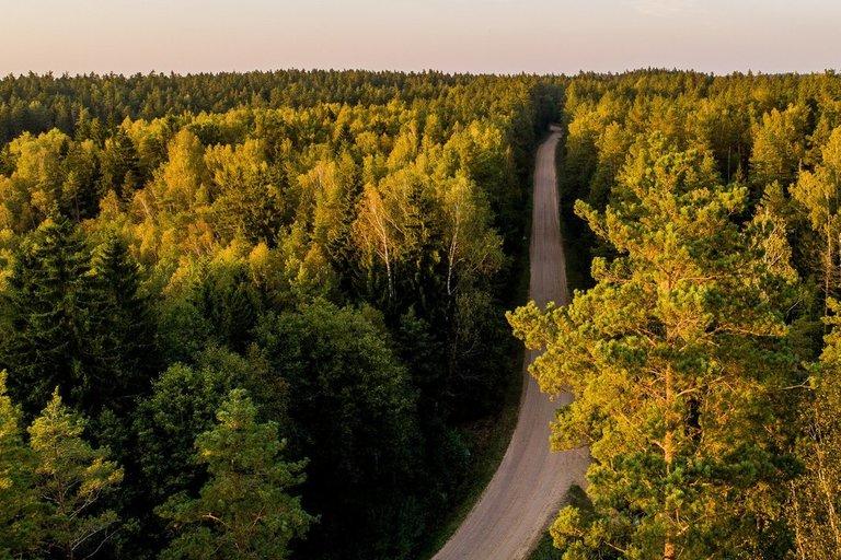 Miškas (Irmantas Gelūnas/fotobankas.lt)