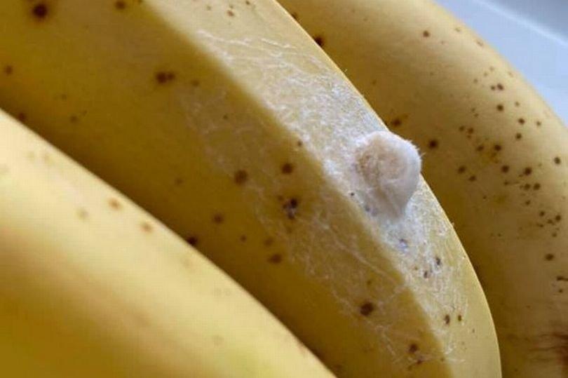 Jemma Davies (34) iš Didžiosios Britanijos ant parduotuvėje pirktų bananų aptiko kiaušinėlių ir nusprendė internete paieškoti informacijos, kas tai. Rezultatai ją pašiurpino.