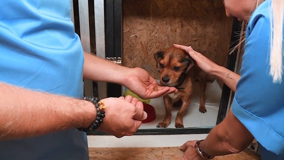 """""""TV Pagalbos"""" veterinaras Morkūnas nenustoja daryti gerus darbus: padėjo kenčiančiam keturkojui"""