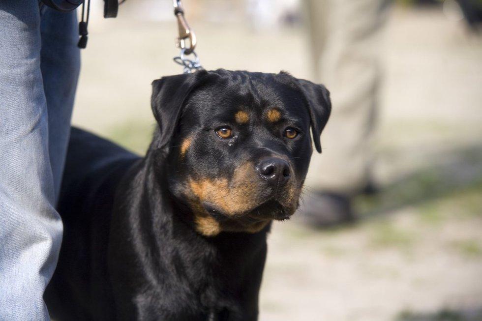 Šuo (nuotr. 123rf.com)