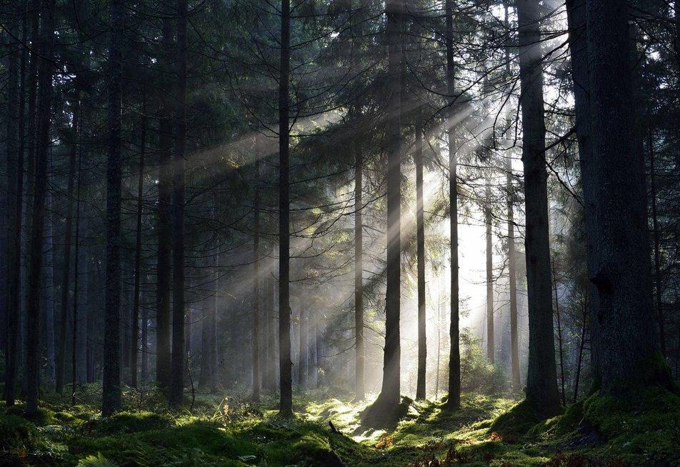 Miško maudynės