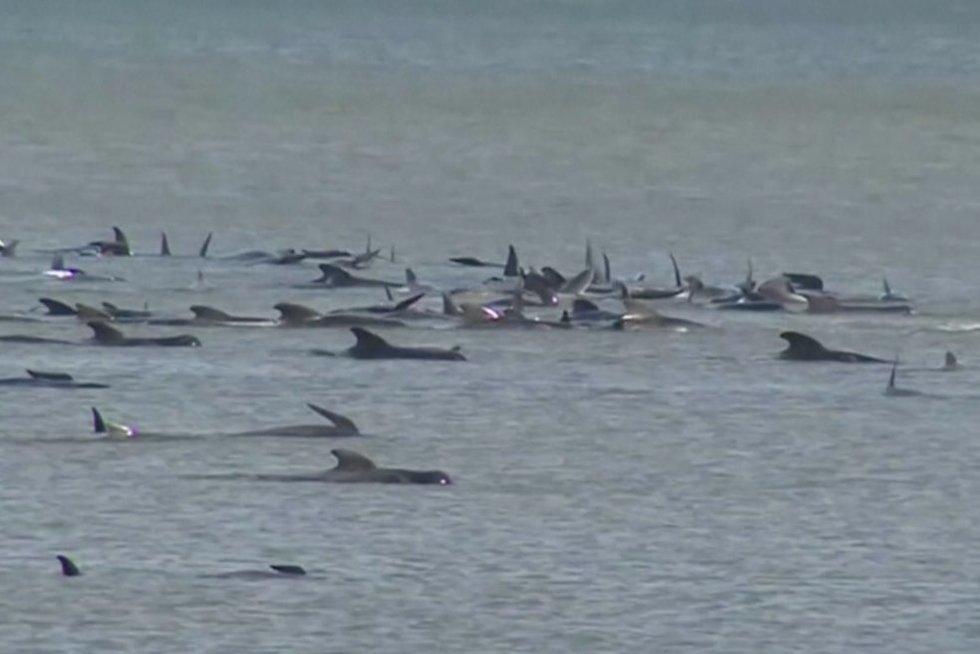 Banginiai (nuotr. stop kadras)