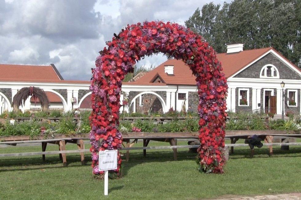 Pakruojo dvare floristai sukūrė 15 įspūdingų meilės arkų (nuotr. stop kadras)