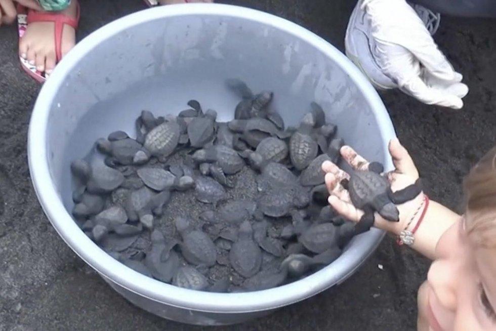 Indonezijoje į jūrą paleido tūkstančius vėžliukų