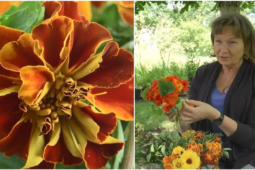 Egzotiškas vaizdas ir gurmaniškas skonis: patarė, kokiais gėlių žiedais galima gardinti maistą