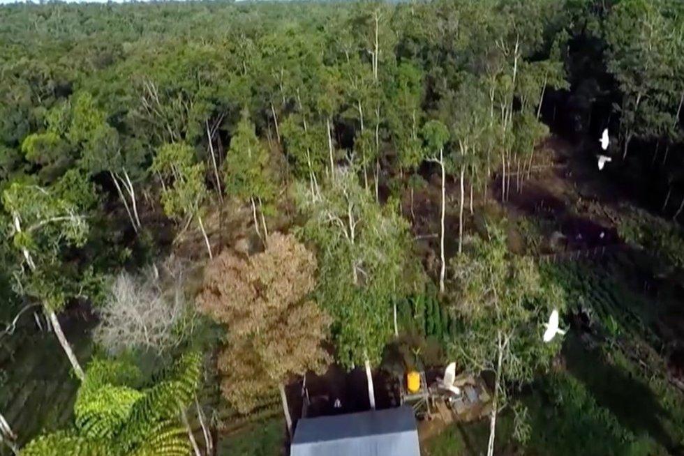 Palmės (nuotr. stop kadras)