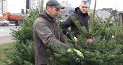 Šventinė karštinė prasidėjo anksčiau: žmonės jau skuba rezervuotis kalėdines eglutes