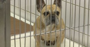 Iš apleistų daugyklų konfiskuoti šunys perpildė prieglaudas (nuotr. stop kadras)