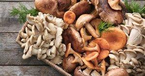 Grybai  (nuotr. Shutterstock.com)