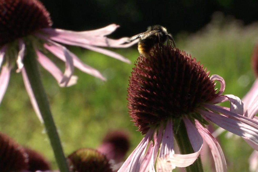Vasaros gerybės: specialistai pataria, kaip jomis stiprinti organizmą (nuotr. stop kadras)