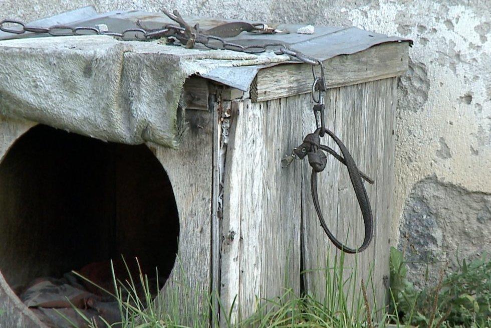Egzekucija šalia Šiaulių:vyras nužudė šunį, nes šis lojo (nuotr. stop kadras)