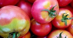 Pomidorai su kalio trūkumu