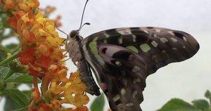 Kauno Botanikos sode – tikros atogrąžos: plazdena pusšimtis drugių (nuotr. stop kadras)