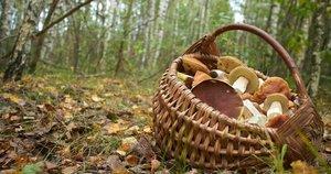 Pintas krepšys (nuotr. Shutterstock.com)