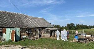 Nedideliame ūkyje Kauno rajone – afrikinio kiaulių maro židinys (nuotr. Organizatorių)