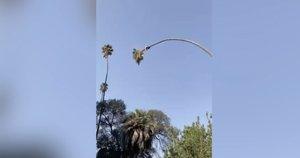 Vyro poelgis medyje šiurpino aplinkinius: aikčiojo iš nuostabos