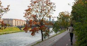 Ruduo Vilniuje (nuotr. Fotodiena/Justino Auškelio)