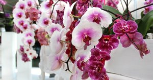 Orchidėja (nuotr. Shutterstock.com)
