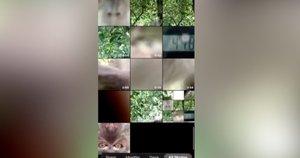 Beždžionė (nuotr. stop kadras)