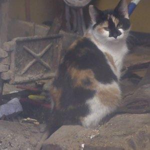 Siaubas Šiaulių rajone: išgertuvių metu katiną įmetė į krosnį