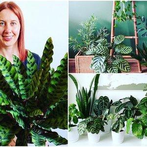 Vilnietė namuose įkūrė džiungles: atskleidė, kodėl kitiems nepavyksta užsiauginti augalų