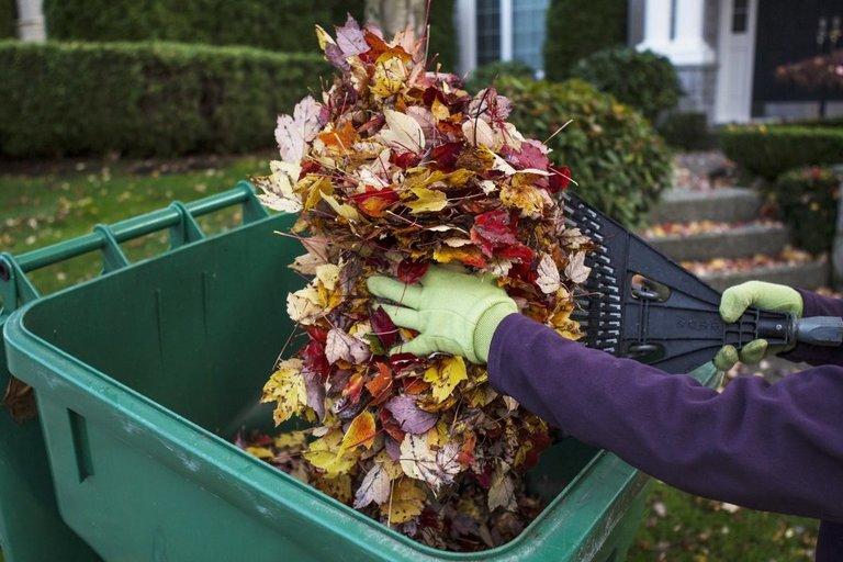 Ekspertė pasakė, ką daryti su nukritusiais lapais (nuotr. 123rf.com)
