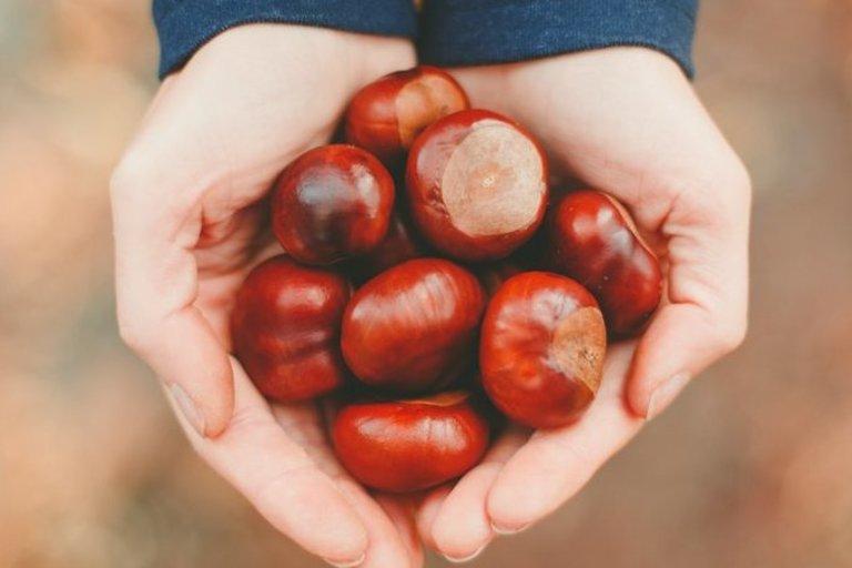 Kaštonai  (nuotr. Shutterstock.com)