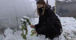 Sniegas ir šaltukas – ne kliūtis: gyventojai džiaugiasi šviežių daržovių derliumi