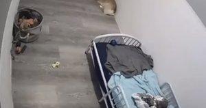 Nemenką sumą suplojusi ir savo šunims lovą nupirkusi moteris vėliau to pasigailėjo (nuotr. stop kadras)
